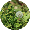 Falcrop SA | Herbicida